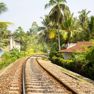 Screen Galle-Destinations-Rising-Galle-beachpalm-forest-across-railway-road-on-sri-lanka-PF7GE8L